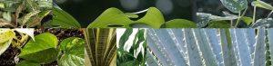Toxic house plants