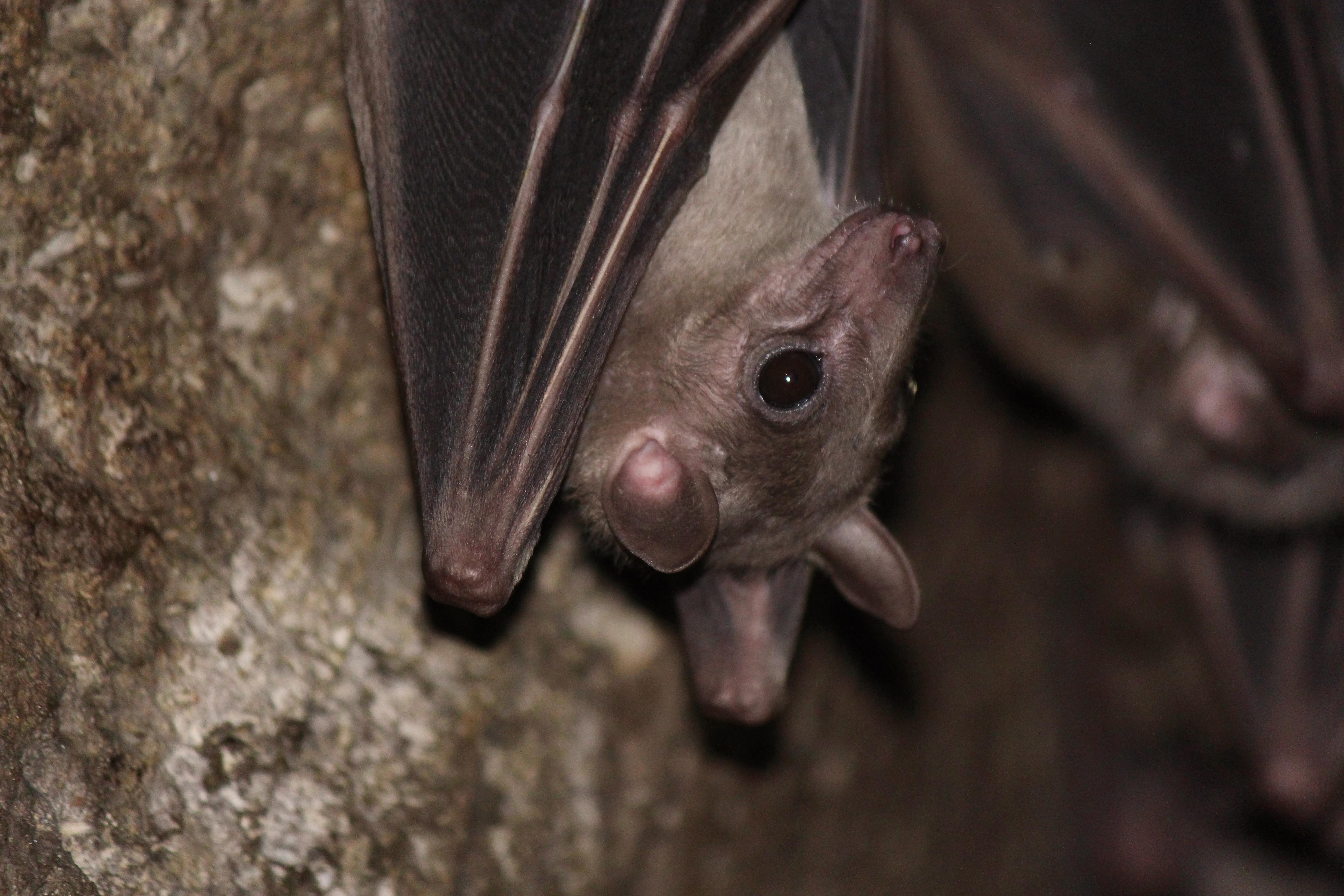 Bats might no longer be as protected as they once were