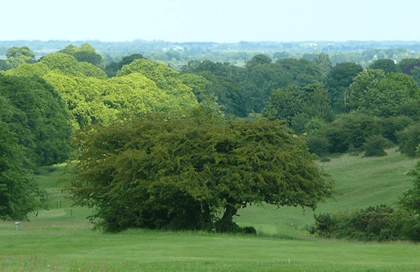 Green rolling countryside of England