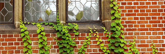 10 Questions On Climbing Plants And Your Property
