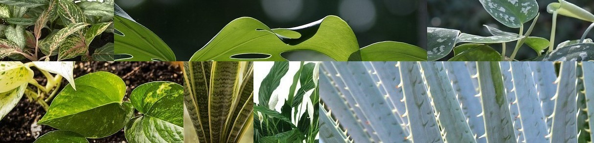 Poisonous plants that may be in your home
